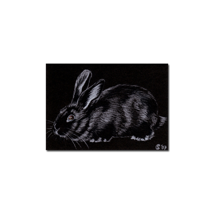 BUNNY 16 rabbit black dutch Easter pet pencil painting Sandrine Curtiss Art