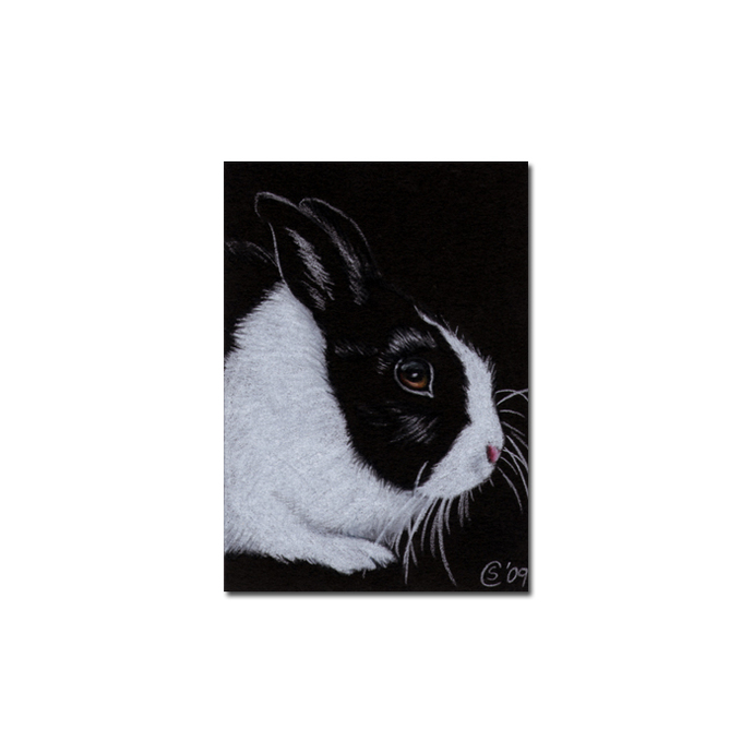 BUNNY 50 rabbit black dutch Easter pet pencil painting Sandrine Curtiss Art