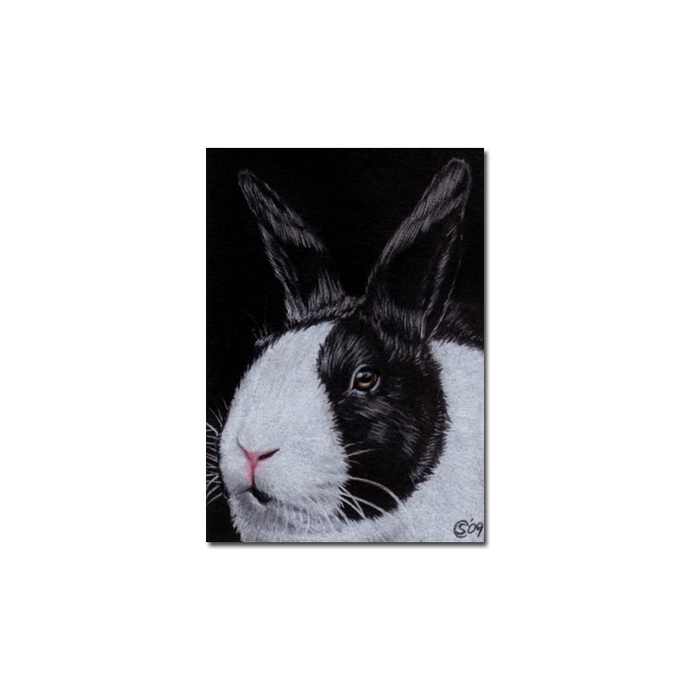 BUNNY 51 rabbit black dutch Easter pet pencil painting Sandrine Curtiss Art