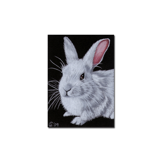 BUNNY 60 rabbit black dutch Easter pet pencil painting Sandrine Curtiss Art