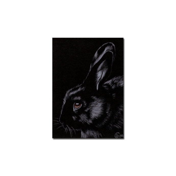 BUNNY 65 rabbit black dutch Easter pet pencil painting Sandrine Curtiss Art