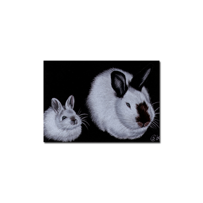 BUNNY 72 rabbit black dutch Easter pet pencil painting Sandrine Curtiss Art