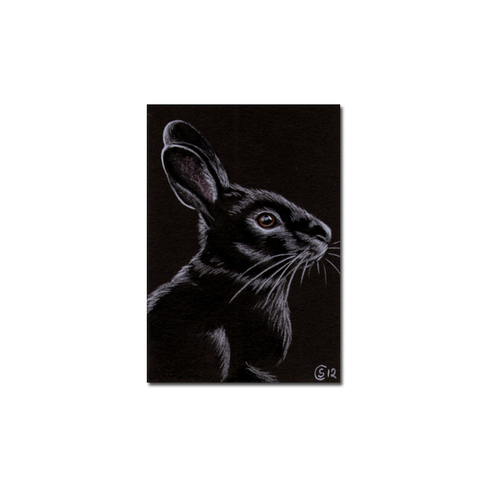 BUNNY 87 rabbit black dutch Easter pet pencil painting Sandrine Curtiss Art