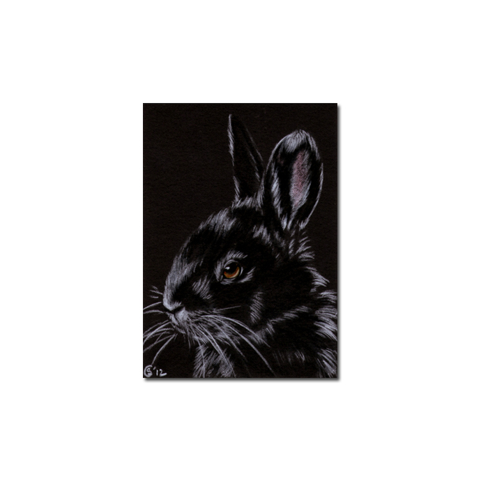 BUNNY 92 rabbit black dutch Easter pet pencil painting Sandrine Curtiss Art