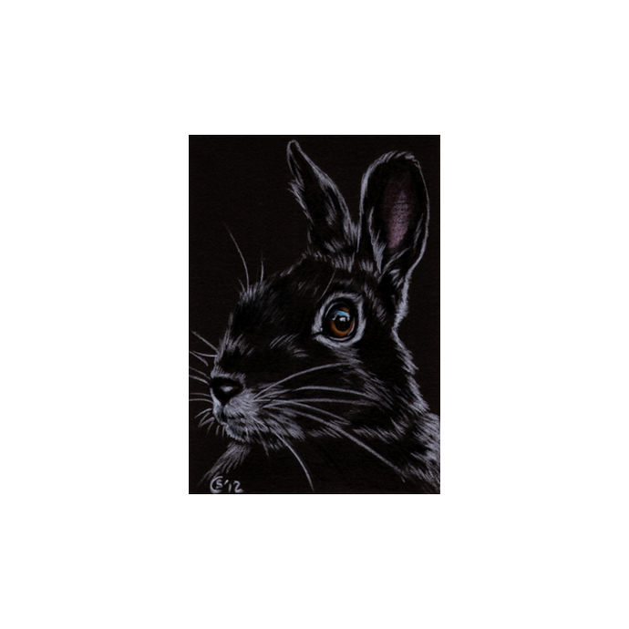 BUNNY 95 rabbit black dutch Easter pet pencil painting Sandrine Curtiss Art