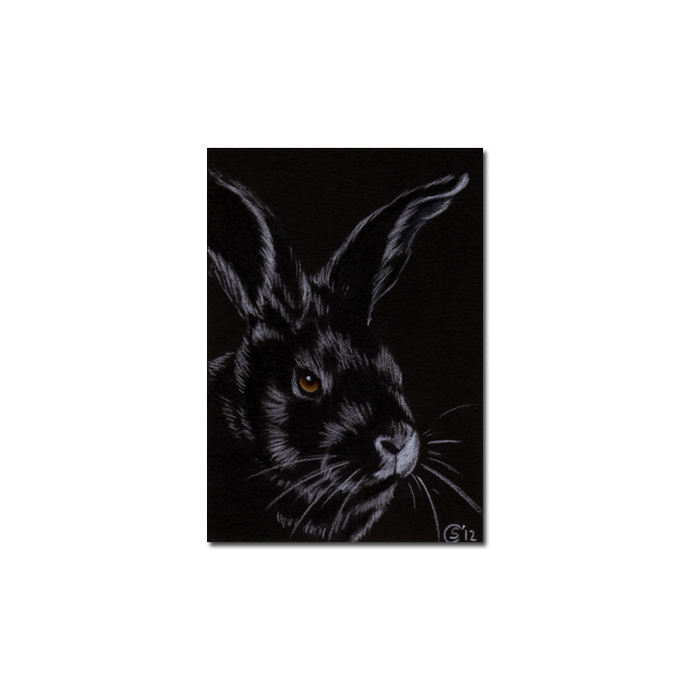 BUNNY 96 rabbit black dutch Easter pet pencil painting Sandrine Curtiss Art