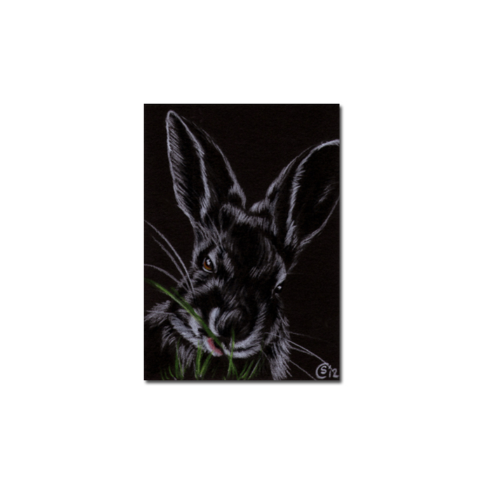 BUNNY 102 rabbit black dutch Easter pet pencil painting Sandrine Curtiss Art