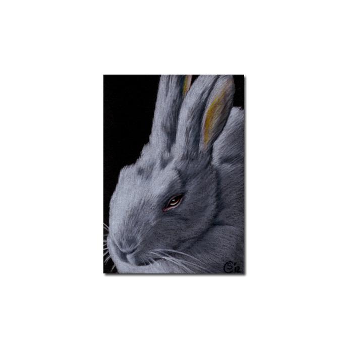 BUNNY 117 rabbit black dutch Easter pet pencil painting Sandrine Curtiss Art