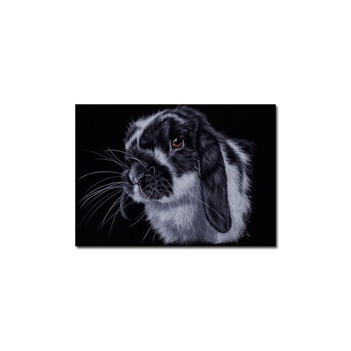 BUNNY 131 rabbit black dutch Easter pet pencil painting Sandrine Curtiss Art