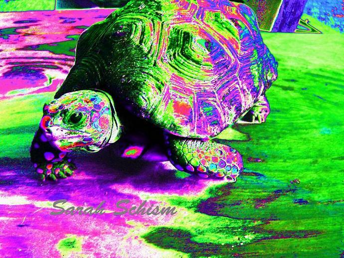 Rasta Turtle 5 x 7