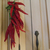 Cayenne pepper string for decoration or spice, string of 20