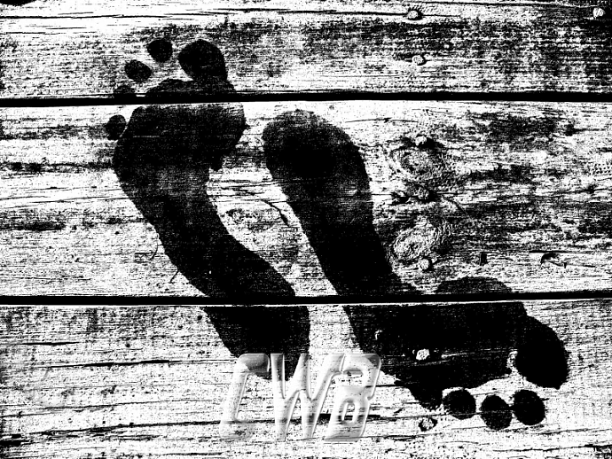 Wet Feet photographic art print