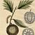 Breadfruit 1815 Austrian Biedermeier Era Antique Botanical Engravings