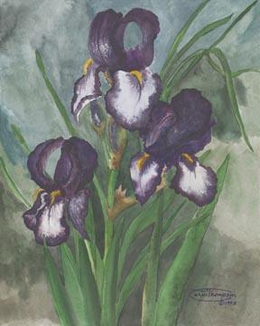 """White And Purple Iris"" Giclee Canvas Print by Carol Thompson"