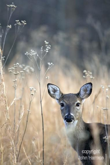 A Whitetailed Deer With a Penetrating Gaze in a Beautilful Setting