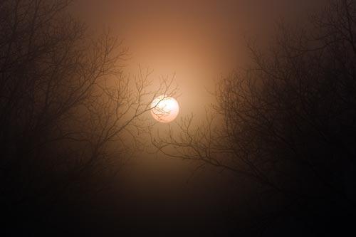 Pecan Grove Sun Rise on a Foggy Morning