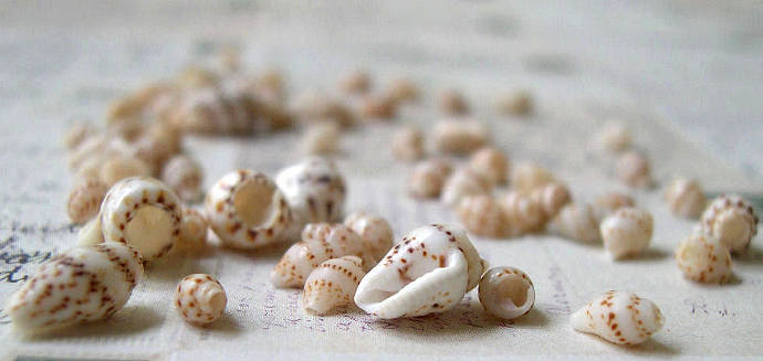 Seashells 1968 Vintage Bulgarian Black Sea Packet of 65 Wee Shells