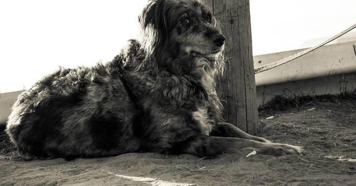 Original poop dog
