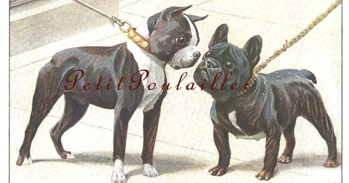Original dogs fuertes 1919 059 french bulldog a wm
