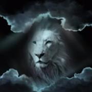 Profile lionhead