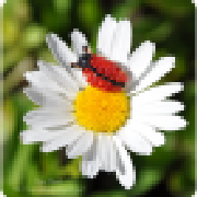 Profile agusyornet2012406280