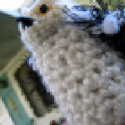 Profile owlery75999741