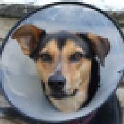 Profile shadowdogdesigns1864355161