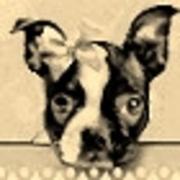 Profile sassydoggs avatar1632467042  2